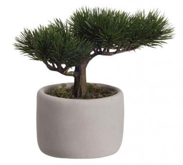 ASA Selection Bonsai Mini Kiefer Deko