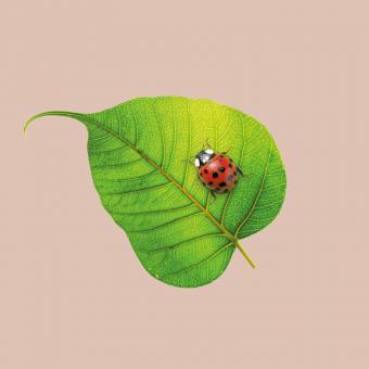 chic.mic Servietten 33x33 cm Ladybug aus Bambusfasern