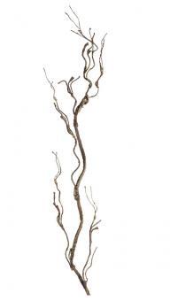 Leonardo Wurzelzweig 83 Braun Fiore Fiore